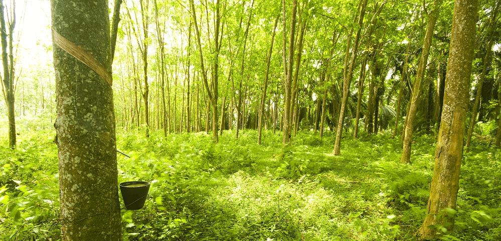 Wald Natur Naturlatex
